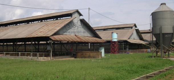 案例分析中典型的东南亚育成猪场(配有防鼠防鸟设施)