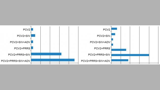 Co-seropositivity in pigs