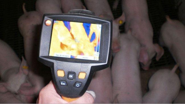 利用温度记录法测量猪舍温度:猪场的实用工具