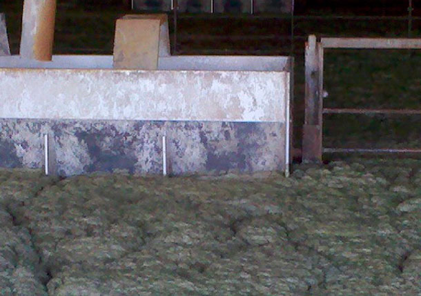 Foam in the animal occupied zone of a deep-pit swine finisher.