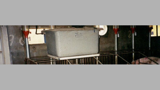 An alternative is to place a tank, as if it was cistern, above each line of gestation crates