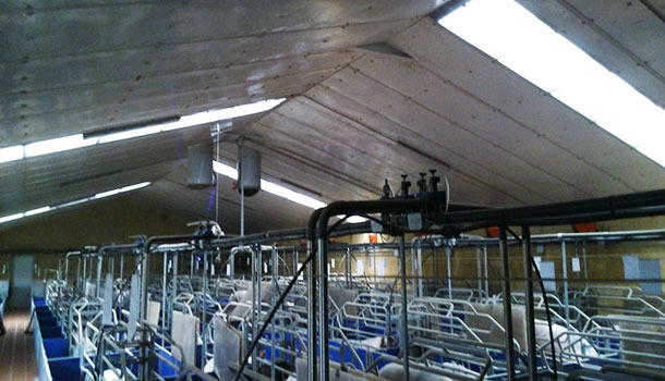Farrowing room with translucid part placed across. The lighting is good, but less uniform than with a lengthwise layout.
