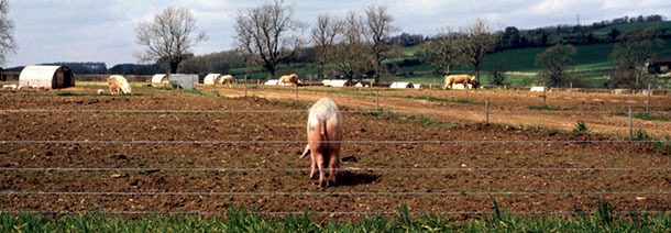 Typical Outdoor farrowing system