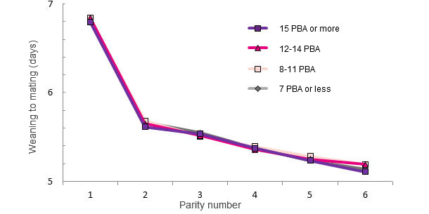 WTS interval during a sow's life based on the number of PBA at first farrowing