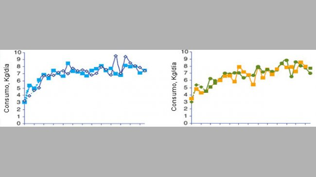 Evolution of the sows' average daily feed consumption according to the batch at the moment of the feed transition.