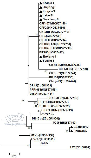 PED 病毒亚洲最新分离株 ORF 3基因的系统进化树