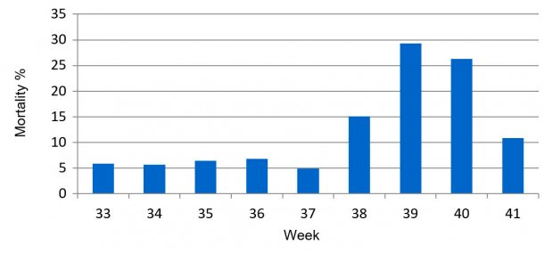 Graph 1. Percentage of pre-weaning weekly mortality, before and during PED.
