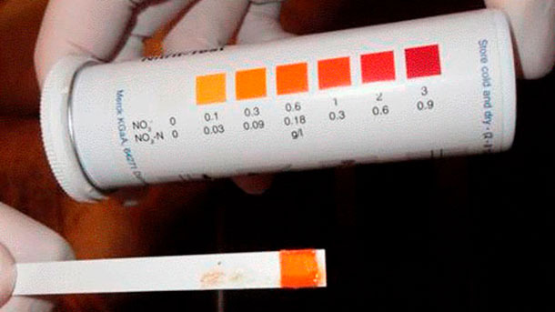 Figure 5: Strip with nitrite test field, indicating nitrite poisoning.