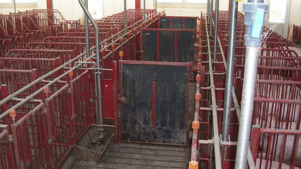 The doors in the front corridors must close every 5 stalls to allow heat detection and mating of groups of 10 sows.