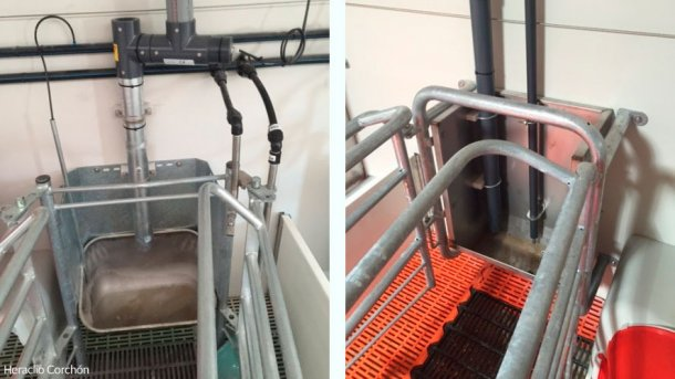 Automatic feeding systems in the farrowing house (both liquid and dry) allow to establish feeding curves, saving the time to daily adjust the dispensers. In both cases it is important to use probes that measure whetherf the sow has eaten the feed provided or not.