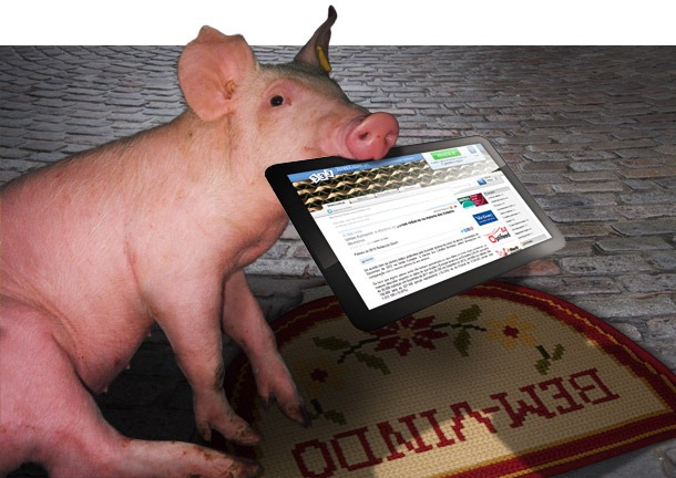 New Section - Latest Swine News