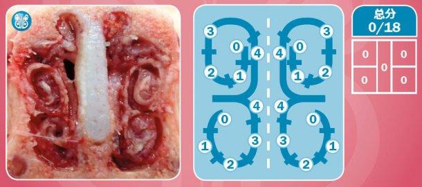 图4.健康动物中鼻部病变的评估。