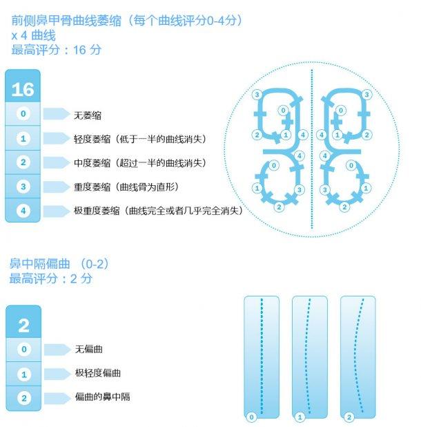 图3.用欧洲药典评估鼻甲骨病变。