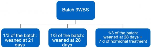 Figure 4. Transition process from a 3-week batch system (3WBS) to weekly batches.