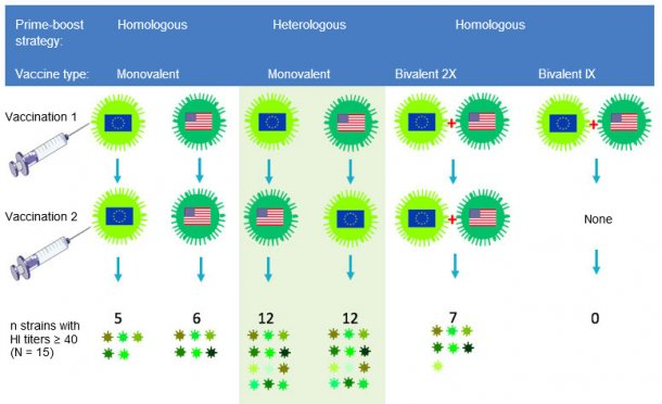 Fig 2. Effect of traditional and heterologous prime-boost vaccination regimens on the breadth of the anti-H3N2 antibody response. European and North American H3N2 SwIV strains are indicated by different flags. Sera collected 14 days after the second vaccination were tested against 15 antigenically distinct viruses including the vaccine strains. The numbers represent the number of viruses against which HI antibody titers were ≥ 40.