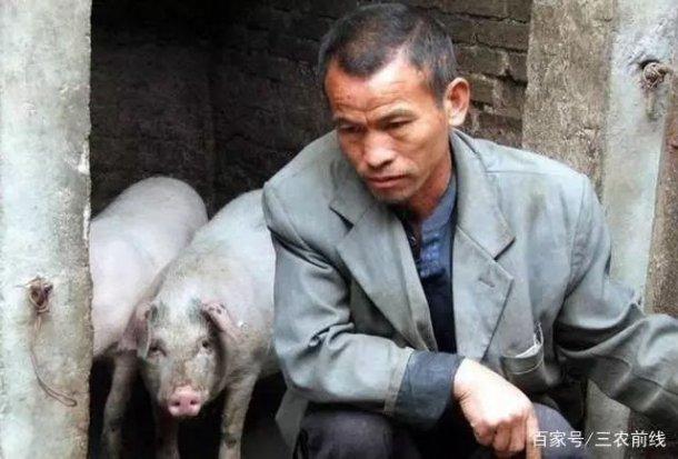 Pig333wechat 4