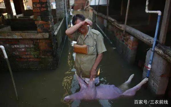 Pig333wechat 3