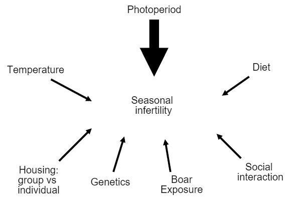 Figure 7. Factors with an influence on the emergence of seasonal infertility.