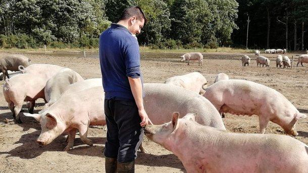 动物与饲养员之间的关系完全不同。