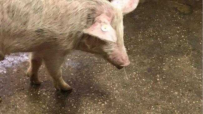 图1:鼻腔分泌物+发烧-猪流感。