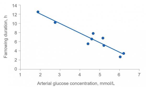 图2:如果母猪能量耗尽,分娩时间会大大延长。血糖通常保持在4.5(4-5)毫摩尔/升,如果肝脏中的糖原耗尽,在进食后不久血糖水平会超过该水平,并在进食数小时后,血糖水平可能下降。