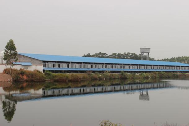 银农马坡原种猪场