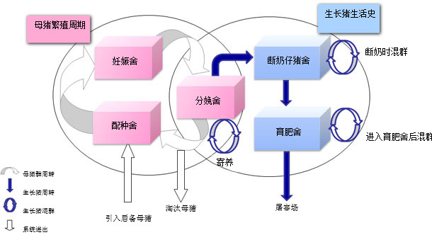 Representation of the pig population dynamic model