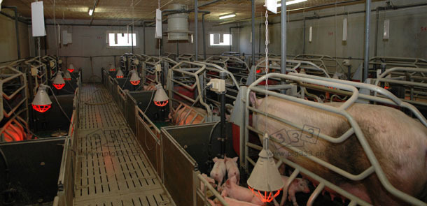 Farrowing rooms