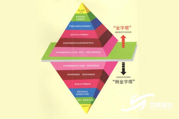 京鹏环宇畜牧金字塔模型