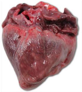 死于40日龄仔猪的心脏。可见右心室极度扩大,多灶性坏死(白斑)和心外膜脂肪组织凝胶状萎缩