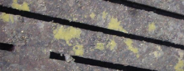 水样,黄色呈抛射状的腹泻,见于5周龄的断奶仔猪