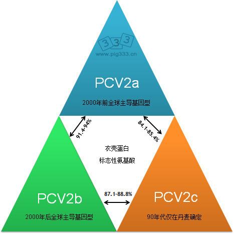主要的PCV2基因类型以及他们基于衣壳基因的关系
